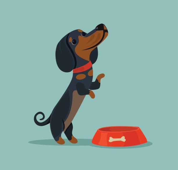 ilustrações de stock, clip art, desenhos animados e ícones de little cute dog character mascot want eat and demand food from owner - dog food