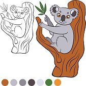 Little cute koala sits on the tree and holds leaves