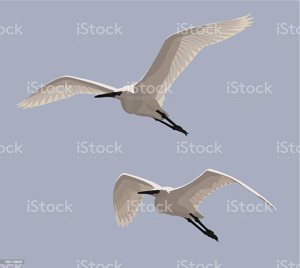 Little Egrets vector art illustration