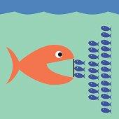 Little Fish Fight