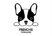 A Little French Bulldog is waiting for feeding.