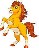 Little funny foal