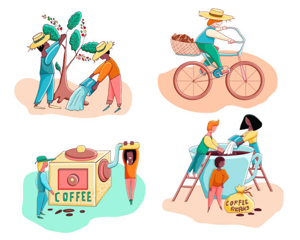 illustrazioni stock, clip art, cartoni animati e icone di tendenza di little funny stylized characters making coffee, harvest coffee and water coffee trees, carries coffee beans  .vector illustration.  cutie cartoon characters set. - coffee farmer