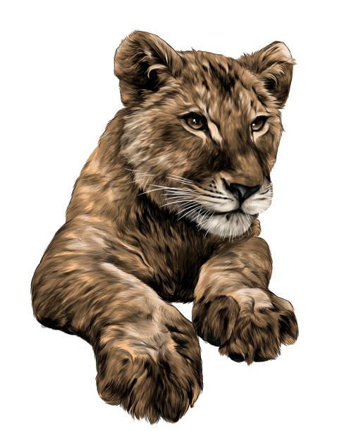 little lion cub head and paws – artystyczna grafika wektorowa