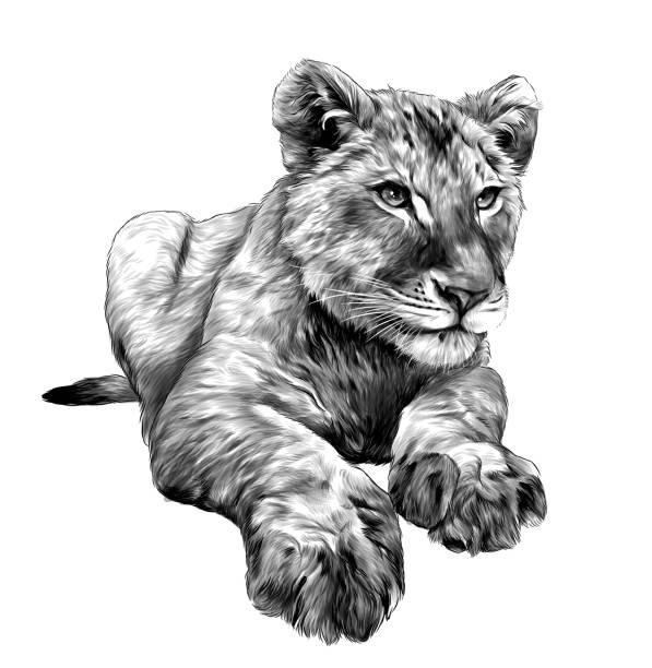 little lion cub lies full length drawing – artystyczna grafika wektorowa