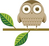 Little owl illustration.