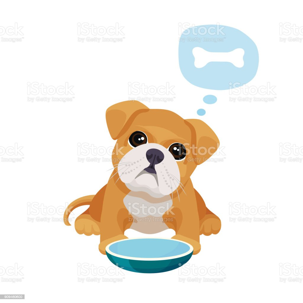 Little puppy with big eyes sits near empty bowl vector art illustration