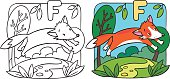 Coloring picture or coloring book of little funny red fox at the lawn. Children vector illustration. Alphabet F