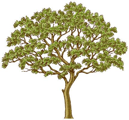 Little tree ink illustration