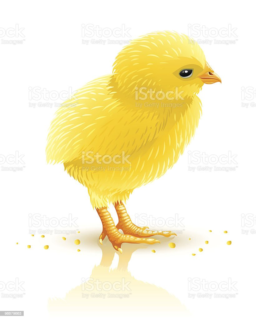 little yellow chicken isolated royalty-free stock vector art