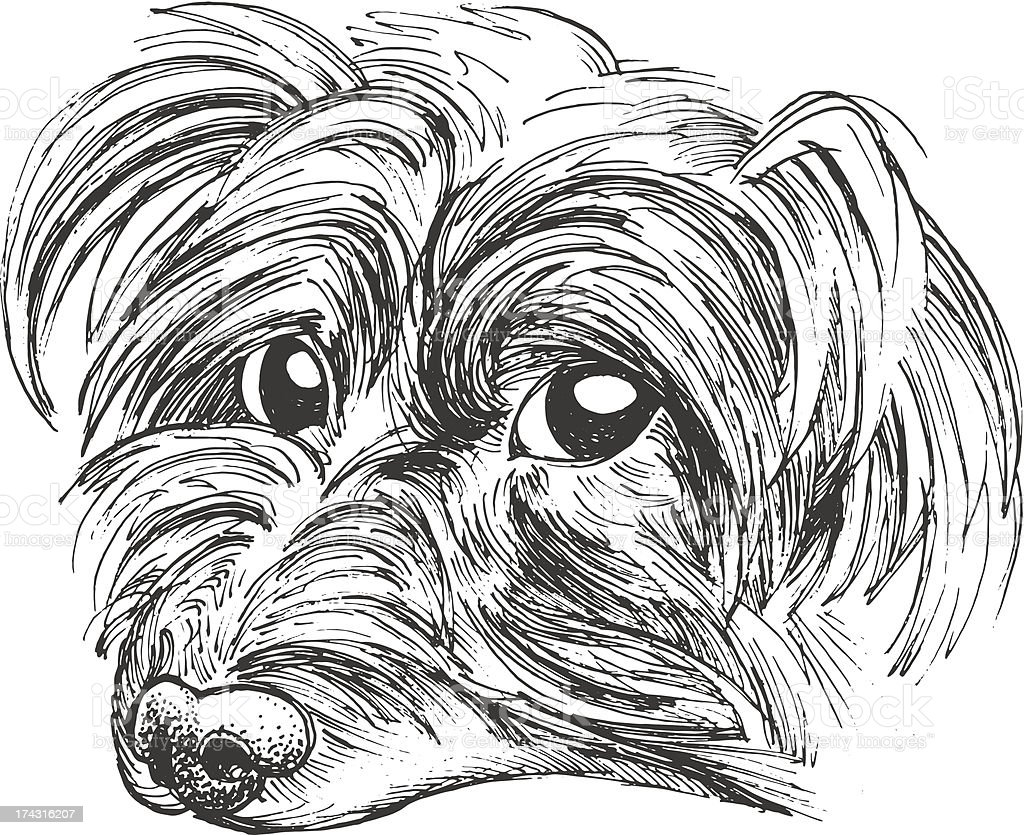 Little Yorkie royalty-free little yorkie stock vector art & more images of animal
