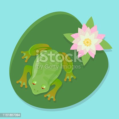 a live frog sits on a water lily on a pond. character vector illustration in color
