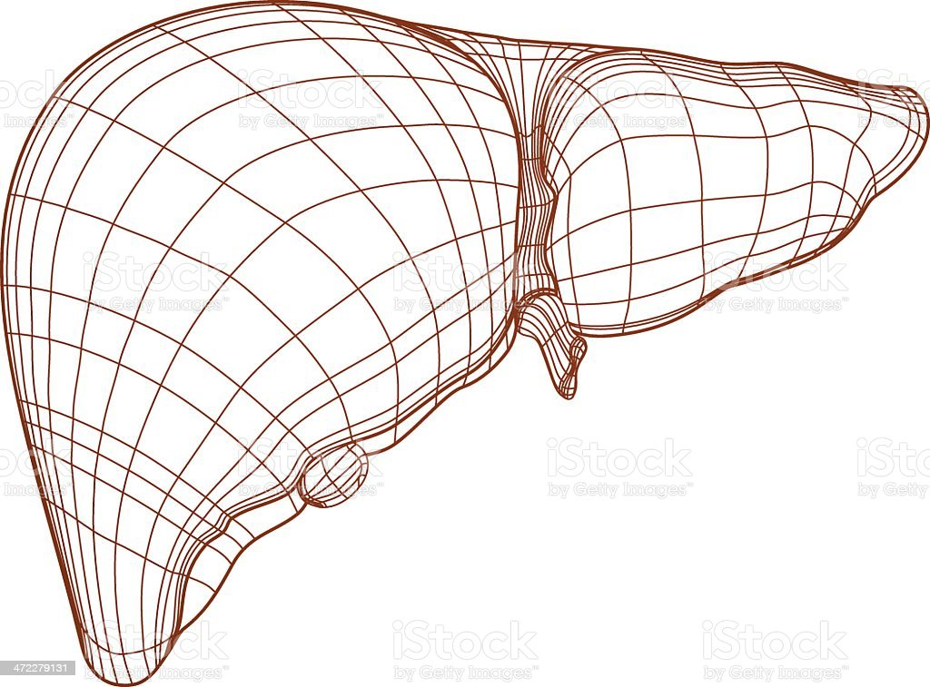 Liver Drawing vector art illustration