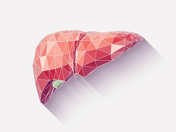 Liver poly faceted vector art illustration