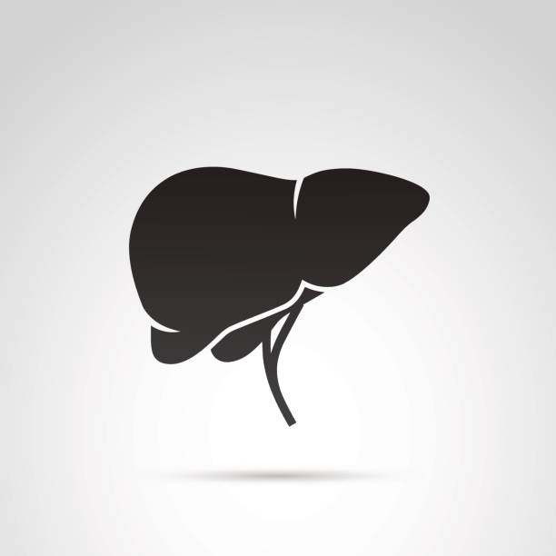 Liver vector icon. vector art illustration