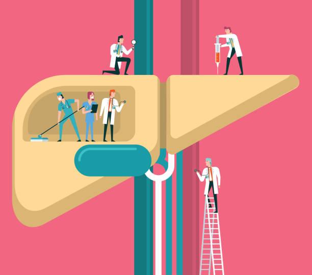 liver Team of doctors diagnose human liver bile stock illustrations