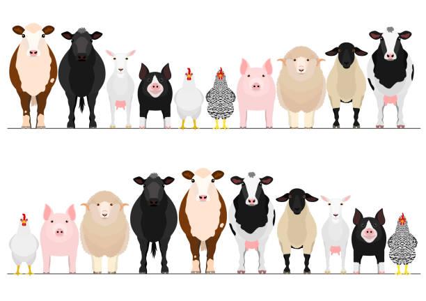 ilustrações, clipart, desenhos animados e ícones de fronteira pecuária conjunto - animais da fazenda