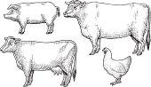 istock Livestock - Domestic Farm Animals 165908931