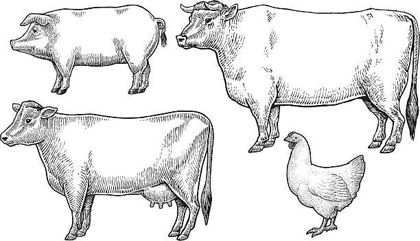 Livestock - Domestic Farm Animals vector art illustration