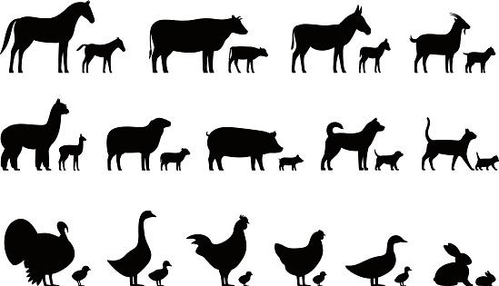 Livestock, Farm animals and their kids,  black icons set, vector illustration