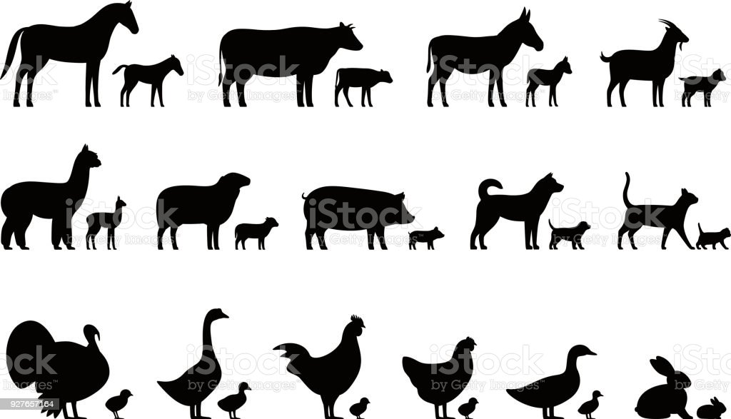 Livestock, Farm animals and their kids,  black icons set, vector illustration vector art illustration