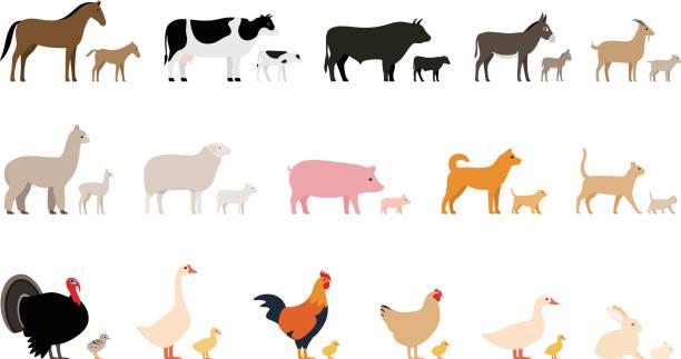 ilustrações, clipart, desenhos animados e ícones de animais, animais da fazenda e seus filhos, o conjunto de ícones pretos, ilustração do vetor - animais da fazenda