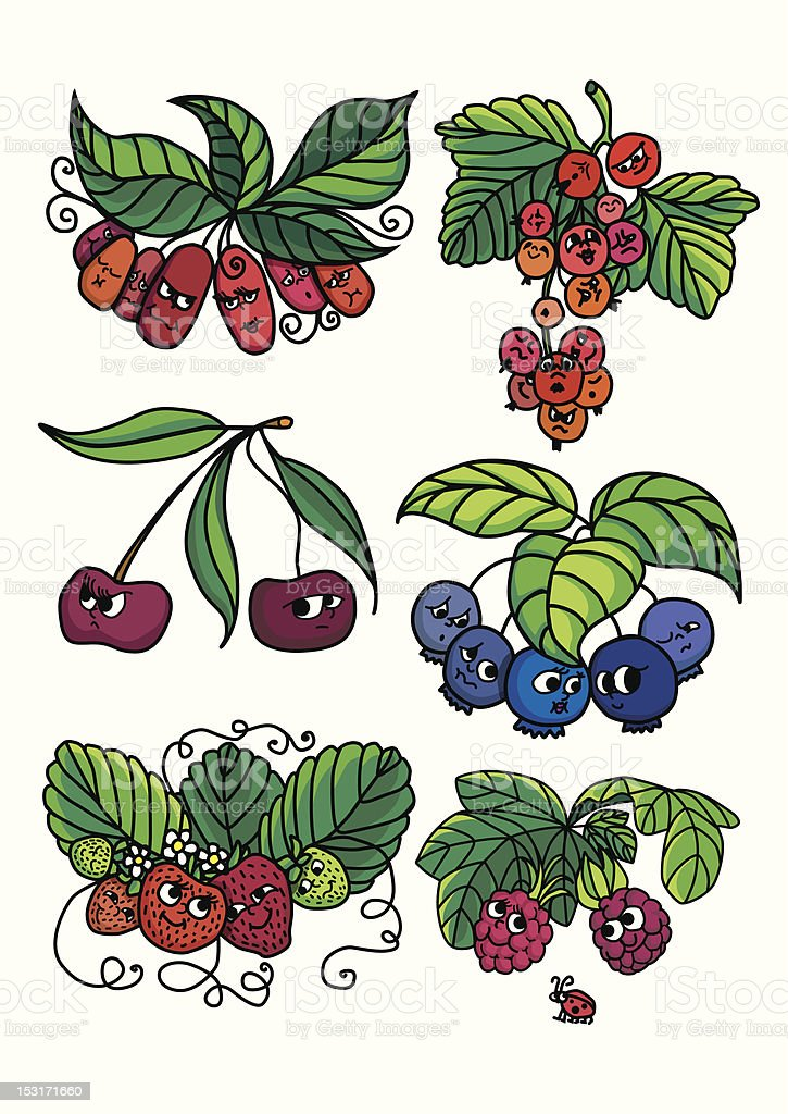 Living berries royalty-free living berries stock vector art & more images of barberry family