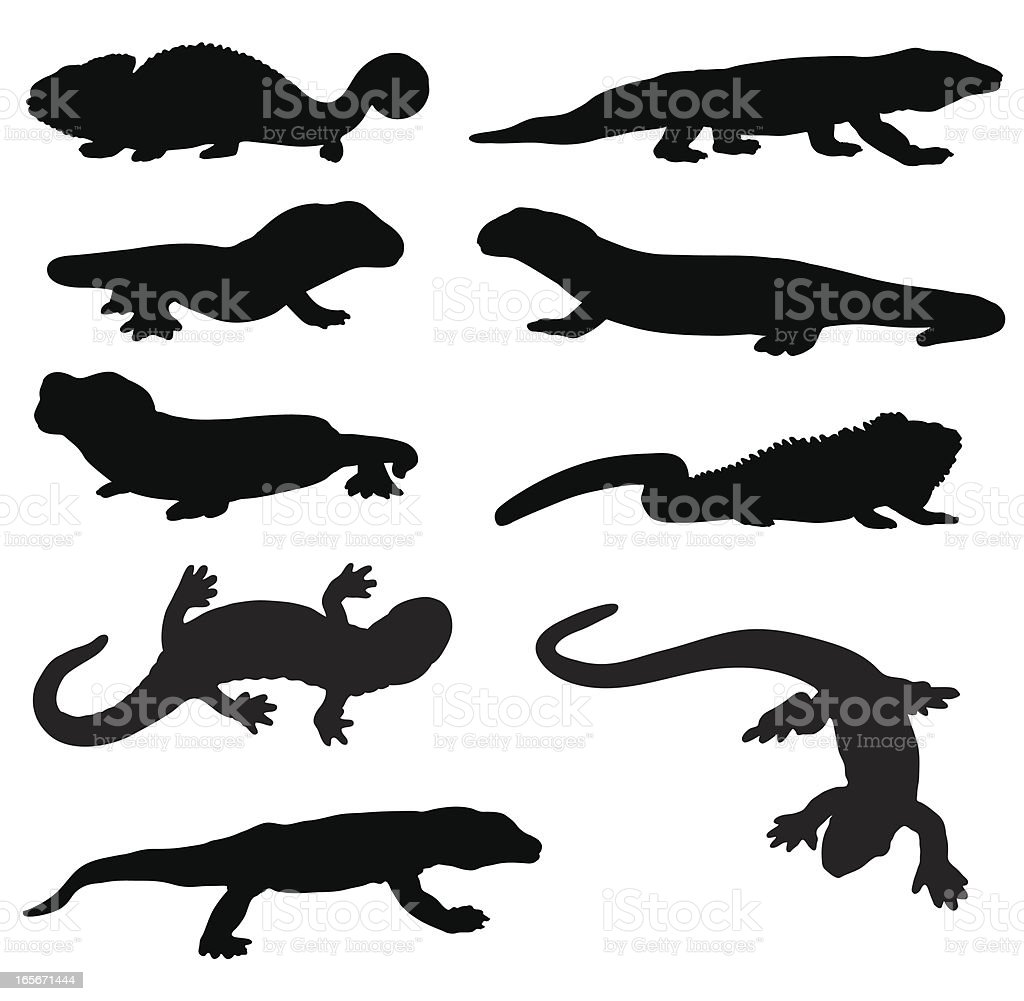 Lizard and newt silhouettes vector art illustration