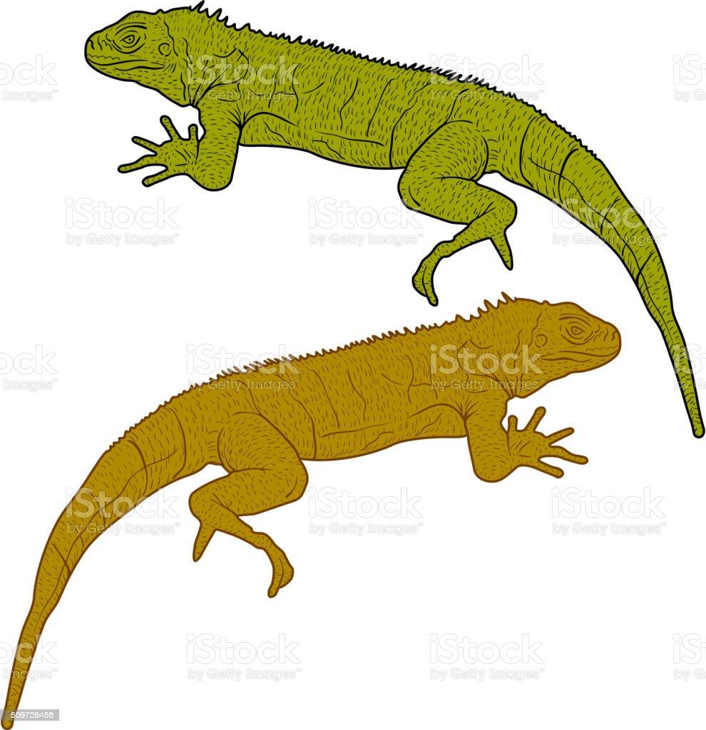 Lizard is goanna silhouette on a white background. Vector illustration vector art illustration