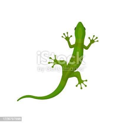 lizard isolated on white background. Vector illustration. Eps 10.
