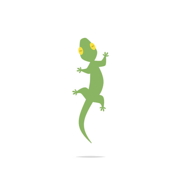 lizard vector - gecko stock illustrations, clip art, cartoons, & icons