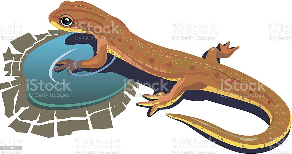 Lizard_in_water royalty-free lizardinwater stock vector art & more images of amphibian