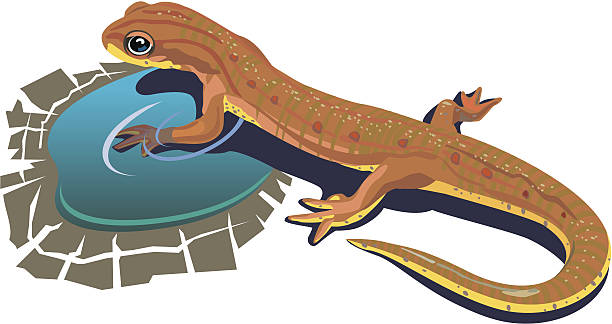 Lizard_in_water vector art illustration