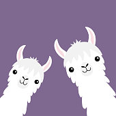 Llama alpaca animal set. Face neck. Fluffy hair fur. Cute cartoon funny kawaii character. Childish baby collection. T-shirt, greeting card, poster template print. Flat design. Violet background Vector