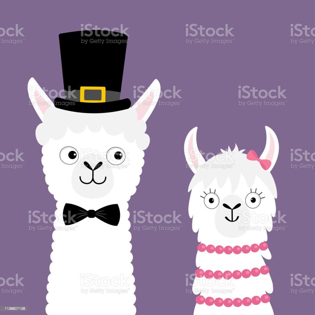 Lama Alpaga Animal Ensemble Couple Damour Joyeux Jour De