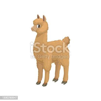 istock Llama alpaca isolated cartoon animal camel family 1330290547