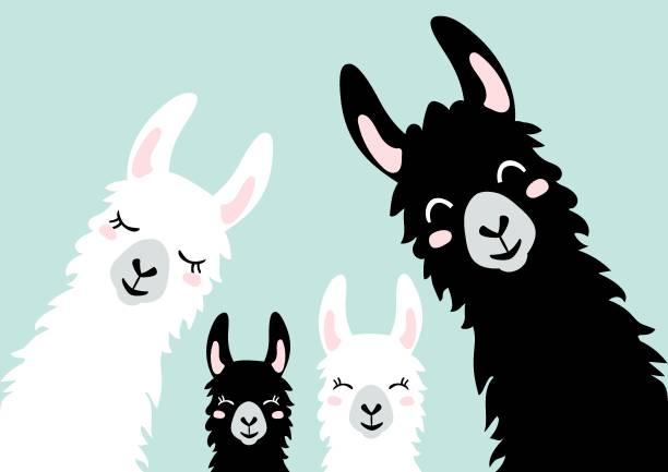 Llama Alpaca. The klan card. Family illustration, vector - Vector Llama Alpaca. The klan card. Family illustration, vector - Vector exotic animals stock illustrations