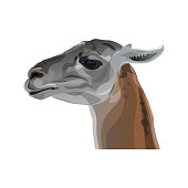 Llama head portrait in profile. Vector illustration isolated on white background