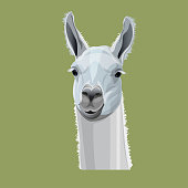 Llama head portrait. Vector illustration isolated on gray background