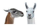 Llama head portraits. Profile and full face. Vector illustration isolated on white background