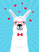 Llama in love in a bow tie and heart-shaped glasses. Valentine's Day greeting card. Adorable alpaca. Portrait of guanaco