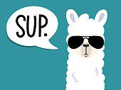 Llama poster with inscription 'sup' means\n'what's up'. Simple alpaca head with sunglasses on blue background. Vector illustration with llama for poster, case, textile, invitation etc.
