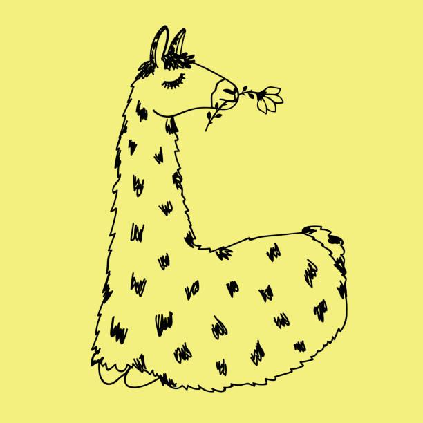 llama vector doodle - doodles stock illustrations, clip art, cartoons, & icons