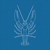 Lobster. Hand drawn sketch on blueprint background