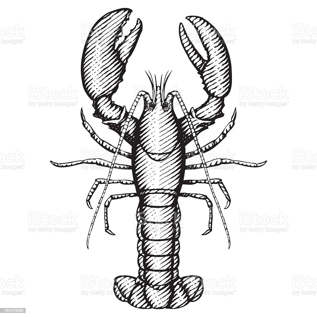 Lobster Illustration vector art illustration