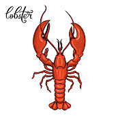 Lobster. Seafood. Vector illustration. Isolated image on white background. Vintage style.