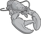 A lobster in grey and black.