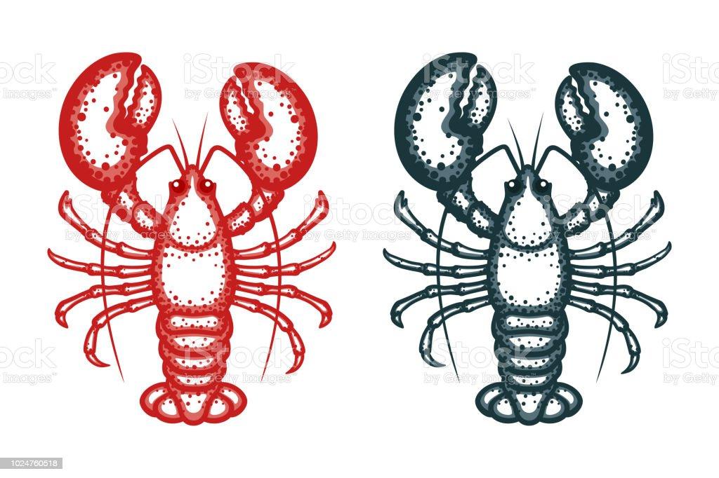 Lobster vector illustration. Crayfish on a white background. Vector seafood illustration vector art illustration
