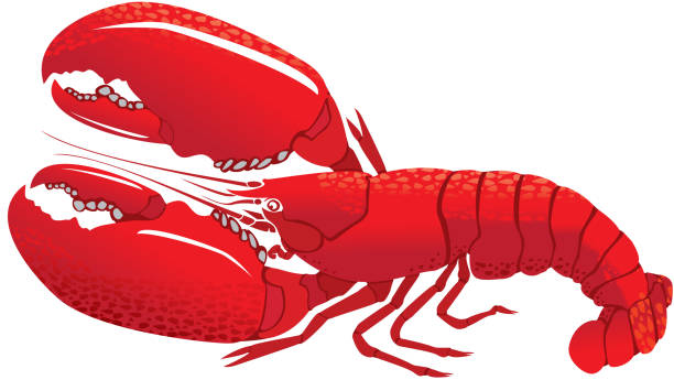 Lobsters with Large Claws, detailed vector art illustration