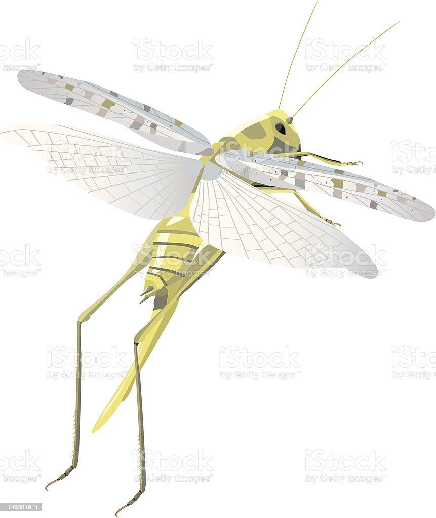 locust flying royalty-free stock vector art